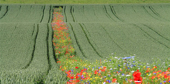Pesticide                                                           free                                                           agriculture:                                                           bloom strips /                                                           flower strips                                                           permit the                                                           reduction of                                                           pesticide use                                                           by up to 61%