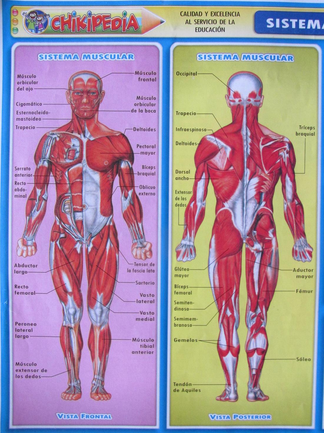 Index of /med/massage/ESP/007-d
