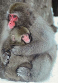 Stop                   Tierversuche - z.B. mit Makake-Affen / stop animal                   experiment - e.g. with macaques